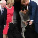 Harry And Meghan Gave Their New Dog An Adorable Name!