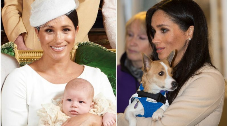 Meghan Wants Archie To Have A Rescue Dog